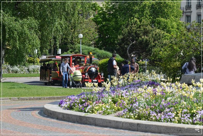 Parcours petit train rive gauche gen ve for Jardin anglais geneve programme